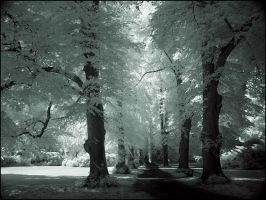 Tree Alley II infrared... by MichiLauke