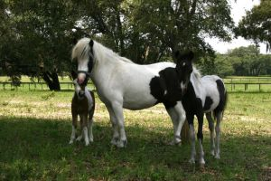 Mini Mare and Foal Stock 2 by GloomWriter
