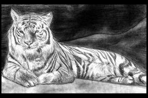 Resting tiger by Amarevia
