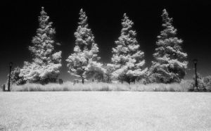 The White Pines by padraig13