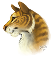 Tiger Bust by bawky