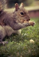 SquirrelFriend - Mouseface by Suinaliath