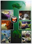 Underwater Stock by Unrestricted-Stock