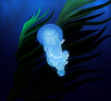 Jellyfish by xXNuclearXx