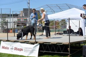 2014 Dog Festival, Best Trick Contest 3 by Miss-Tbones