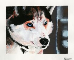 Husky Painting by Nyte-Tyme