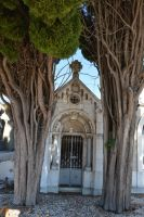 Old grave between two trees in Provence by A1Z2E3R