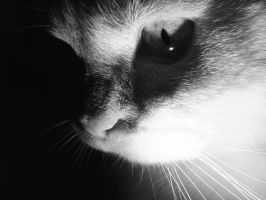 White Cat by Jester-Genso