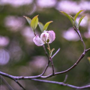 Magnoliales by LuciaConstantin