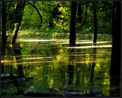 The Flooded Woods 2 by bamako