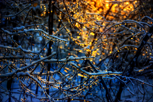 Frost Lights by Qels
