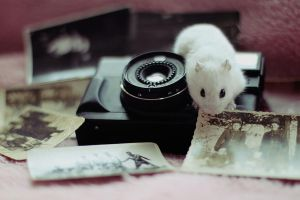 Vintage hamster VI by CassiesCrue