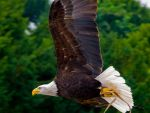 Woburn Eagle II by garethjns