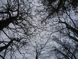 Tree Branches by greenough