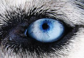 Dog's Eye by TimPhotography