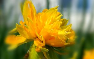 Spring Colors: Yellow  WS by Casperium