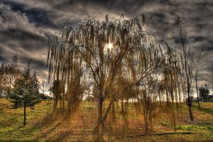 Backlight #2 - HDR by yoctox