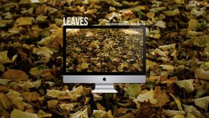 Leaves by krees91
