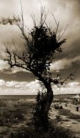 The dark tree by AntonioAndrosiglio