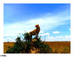 Kenya's journey by Only-one-feeling