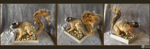 Fox Squirrel Life-size Mount by LimitlessEndeavours