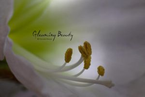 gleaming beauty by hortensie