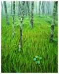 River of Grass by Ian-Plant