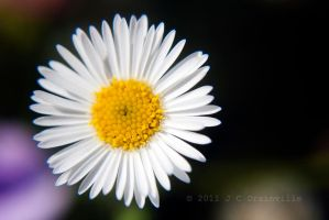Sunny Side Up by jdrainville
