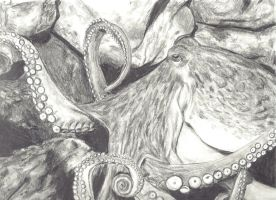 Giant Pacific Octopus by decomposerdoll
