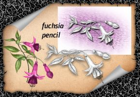 Fuchsia Pencil by roula33