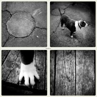 All About a D O G by UrbanRural-Photo