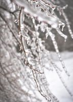 Branches covered in ice by Rozina