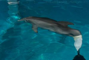 Winter the Dolphin 3 by EarthEmerald