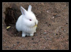 Bunny by Creepling