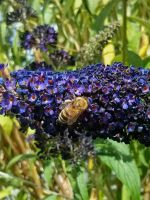 Busy Bee by ScienceMonster