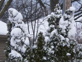 Snow Trees by Jrathage-Stock
