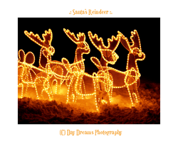 .:Santa's Reindeer:. by DayDreamsPhotography