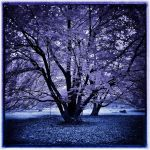 Pink Tree Blue Earth infrared by MichiLauke