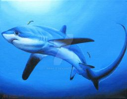 Thresher shark by rieke-b