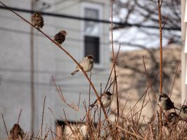 Wintering Finches 02 by tmfNeurodancer