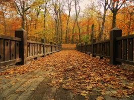Leaf Covered Bridge by TimeKiller357