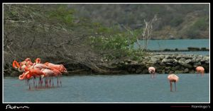 Nice flamingo's by simoner