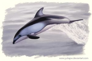 Pacific White-Sided Dolphin by YuliaPW