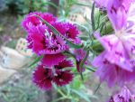 Chinese Carnations arrangement by bev3d