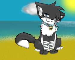 Sitting on the Beach... by icefire8521
