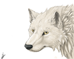 Wolf by Valaarr