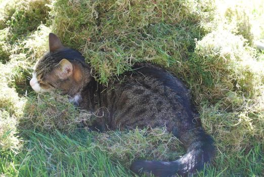 a cat in a pile of grass 2 by igotnoname