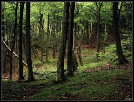 Beechen seaside forest by Elenya-Noldo