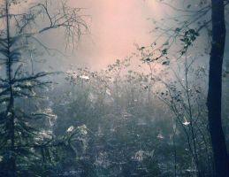 Fairy forest by LaMusaTriste