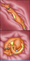 hippowgulp - vore comic 10-12 by ForcesWerwolf